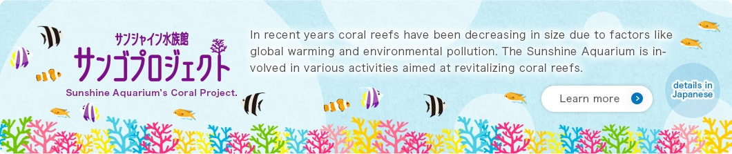 Sunshine Aquarium's Coral Project. In recent years coral reefs have been decreasing in size due to factors like global warming and environmental pollution. The Sunshine Aquarium is involved in various activities aimed at revitalizing coral reefs.